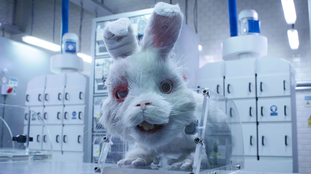 En México se salvará a Ralph: se castigaran las pruebas cosméticas en animales